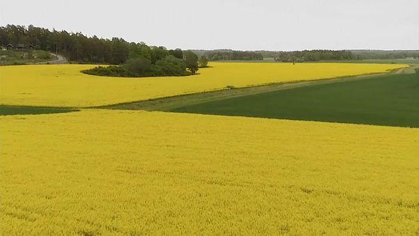 İthalatın yüzde 14 arttığı Türk tarım sektörü çözüm arıyor