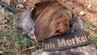"""Ein griechischer Hund namens """"Merkel"""""""