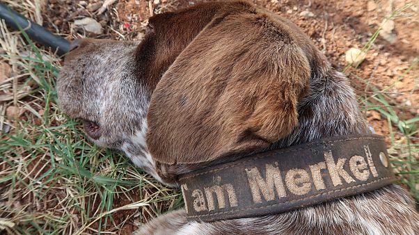 Yunanistan'da bir köpeğe Merkel ismi verildi