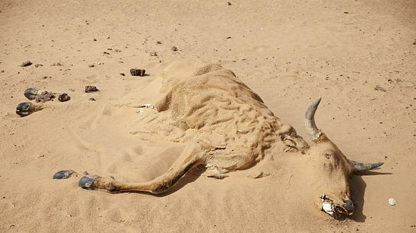 هشدار سازمان ملل درباره خشکسالی در خاورمیانه و شمال آفریقا