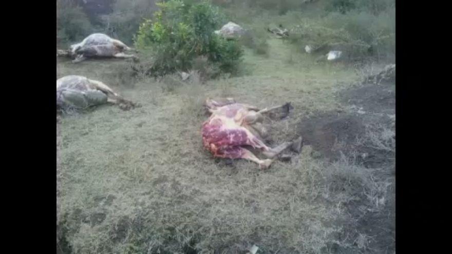 Burros esfolados no Quénia