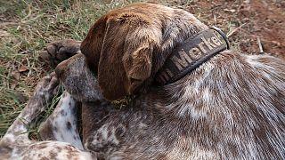 "Perro en Grecia: ""Me llamo Merkel"""
