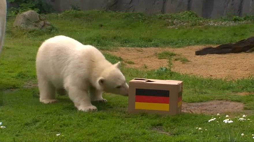 فيل يتنبأ بهزيمة ألمانيا في كأس العالم 2018 ودب يتوقع الفوز