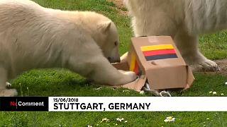 Une oursonne polaire rassure les supporteurs allemands