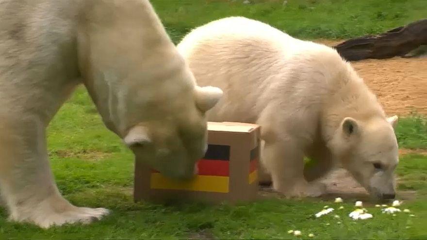 Eisbärbaby Nanook orakelt Sieg der deutschen WM-Elf