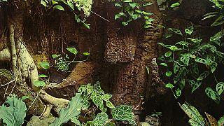 7 Meter lange Python verschlingt Frau im Garten