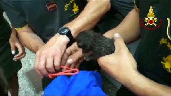 Yavru kediyi itfaiye ekipleri kurtardı