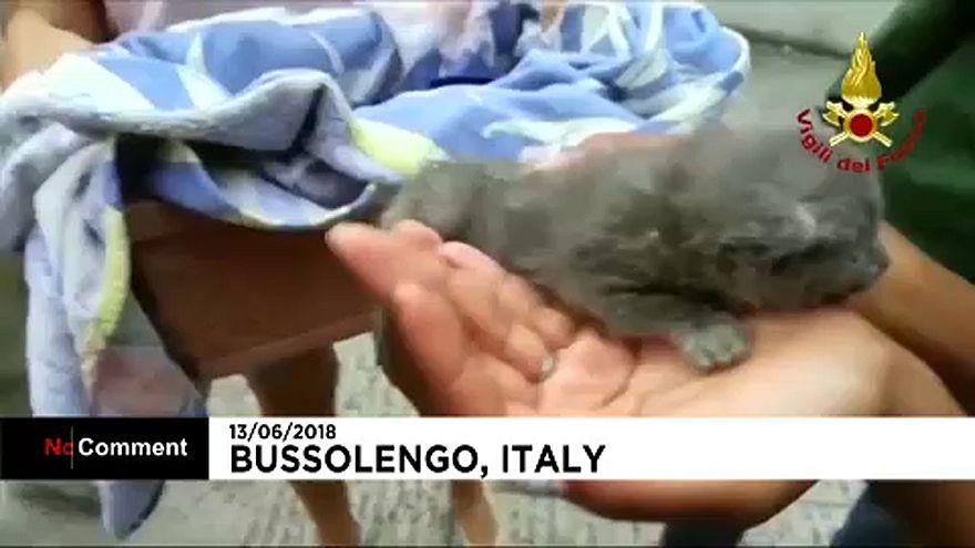 Cicamentés Olaszországban