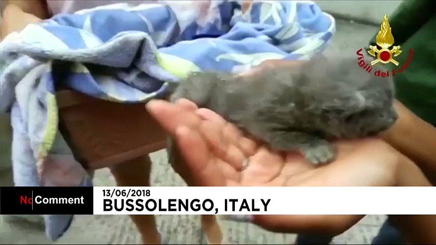 Trois adorables chatons sauvés par des pompiers italiens pleins de ressources