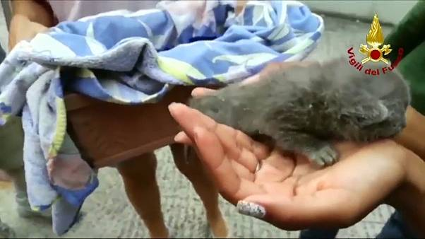 Bombeiros salvam gatos bebés presos num tubo com mais de um metro