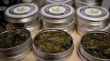 Szeptembertől legális lesz a marihuána Kanadában
