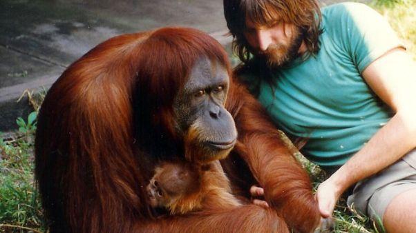 Dünyanın en yaşlı orangutanı 62 yaşında öldü