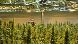 Канада на шаг ближе к легализации