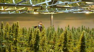 Canadá da un paso más para legalizar el cannabis
