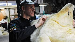 Polar bear carcasses, big cats recovered in global wildlife operation
