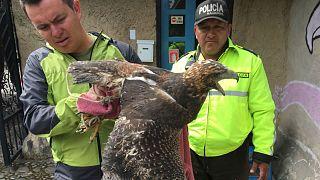 Vaste coup de filet contre le trafic d'animaux sauvages