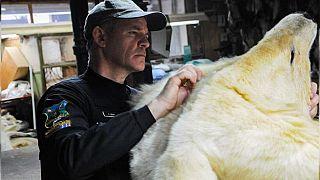 Tráfico de animales: cadáveres de osos polares, felinos y reptiles recuperados en una macroperación