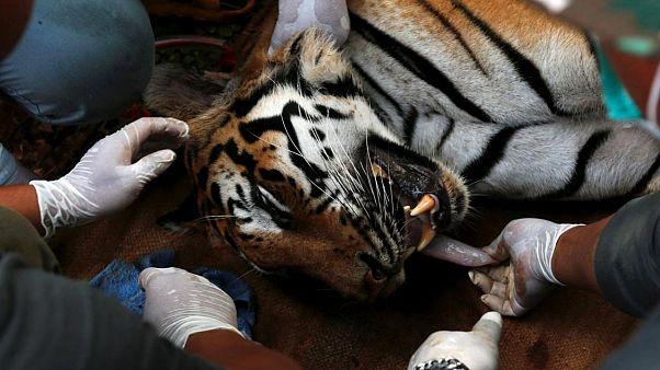 Interpol'den yabani hayvan kaçakçılarına darbe