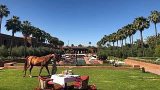 An oasis in Marrakesh