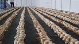 Watch: Greek woman breaks world record for longest garlic braid