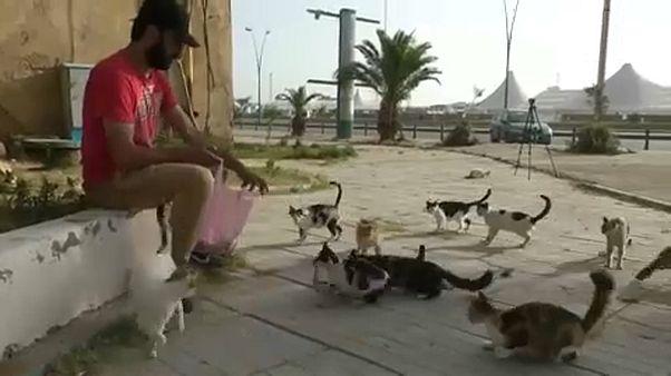 محمد سعيد يطعم القطط في الشارع