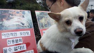 Photo prétexte Corée du Sud : jugement sur consommation de viande de chien.