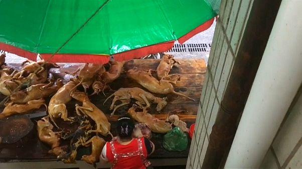 شاهد: مهرجان سنوي في الصين لأكل لحوم الكلاب وضغوط لإلغائه