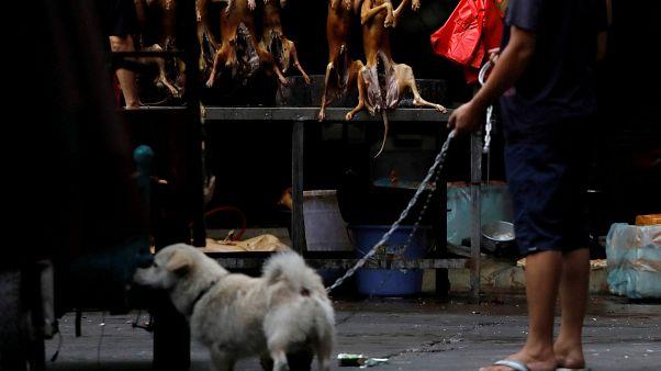 Hayvanseverlere müjde: Güney Kore'de köpek kesmek artık yasak!