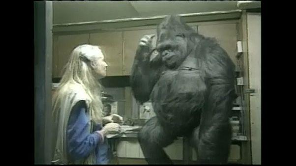 Elment Koko, a világ egyetlen jelelő gorillája