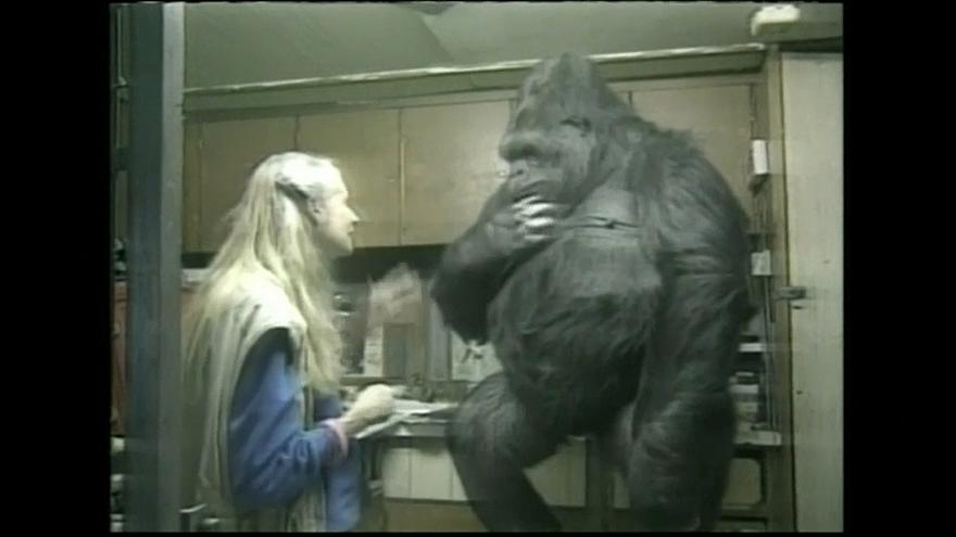 Trauer um Gorilla-Dame Koko