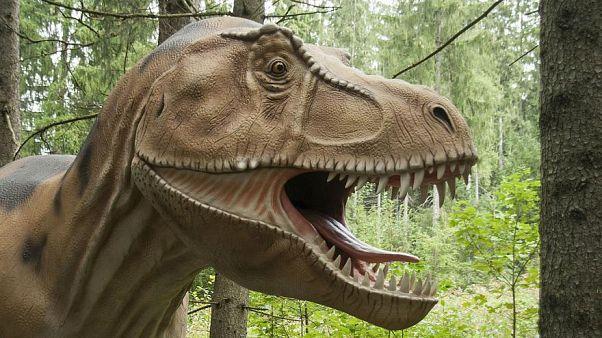 تيرانوصور لم يكن قادرا على إخراج لسانه