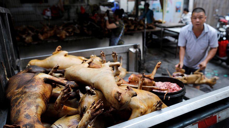 Köpek eti festivali tepkilere rağmen başladı