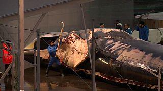 L'Islande reprend la chasse à la baleine