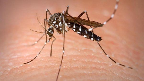 إصابة أول إنسان بفيروس ينتقل بين الحيوانات فقط