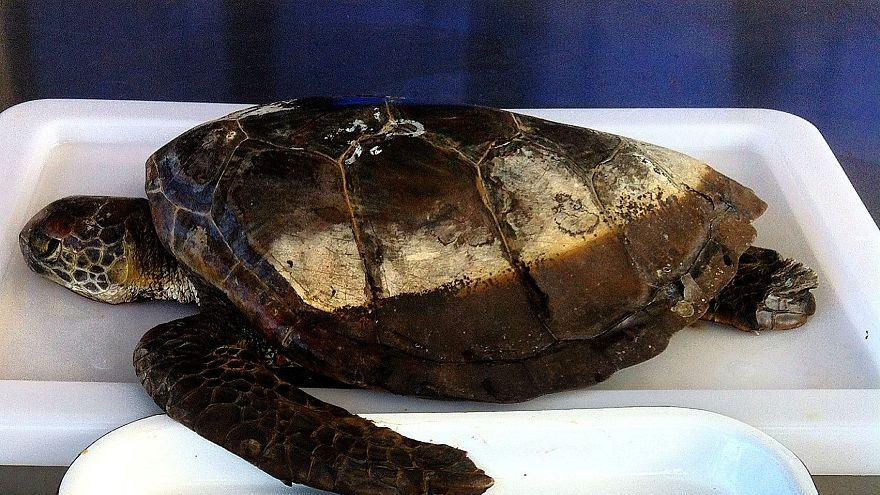 Çin'de 150 milyon yıllık kaplumbağa fosili bulundu