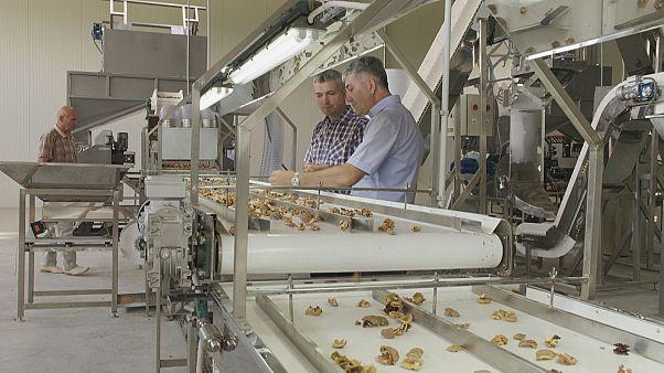 Μολδαβία:Ευρωπαϊκή πρωτοβουλία για τον εκσυγχρονισμό των αγροτικών επιχειρήσεων