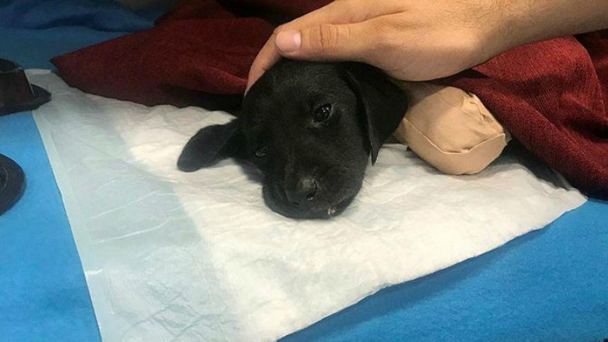 İşkenceyle öldürülen yavru köpek soruşturmasında kepçe operatörüne tahliye