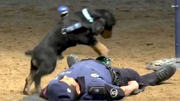 Debunked: Spanish police dog 'performing' CPR is stunt for kids