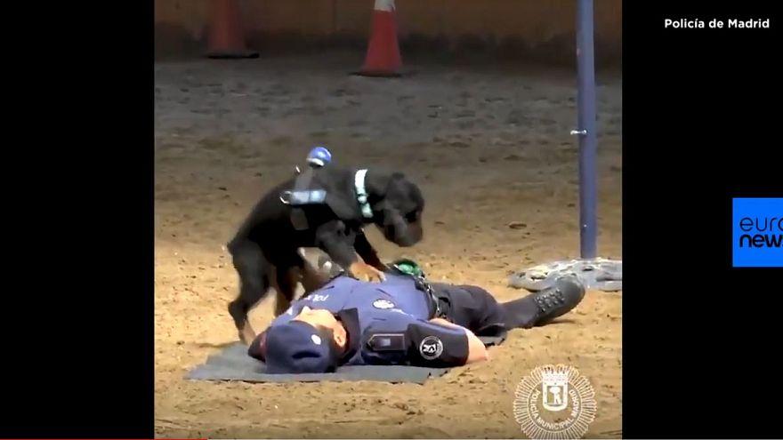 No, quel cane poliziotto spagnolo non fa il massaggio cardiaco: è uno show per bambini