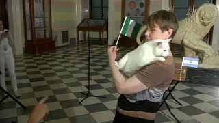 القط آخيل بعد أن توقع فوز نيجيريا