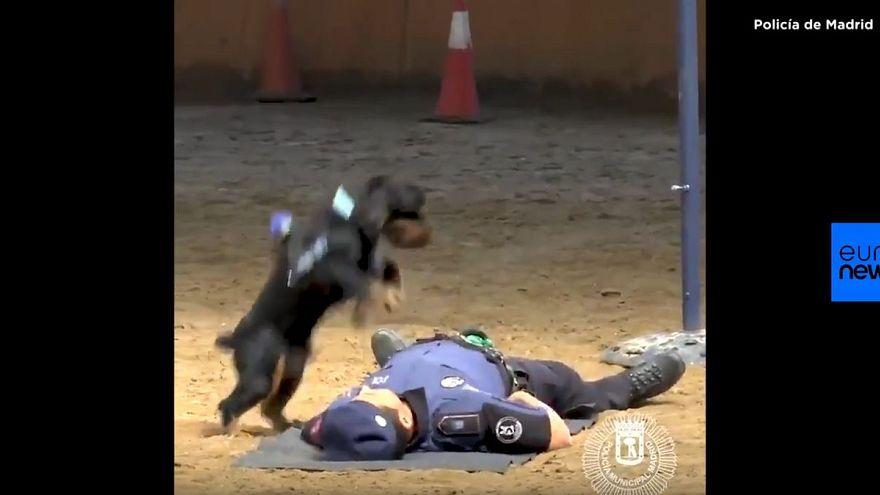 3 Mio. Klicks für Hund, der Polizisten 'wiederbelebt'