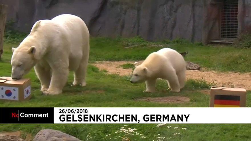 Oráculo dos ursos prevê empate entre Alemanha e Coreia do Sul