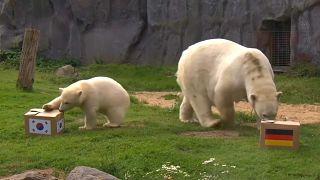 Медведи говорят «ничья»