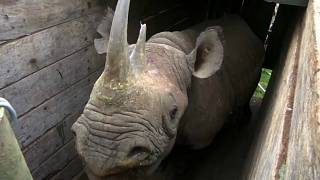 Relocation of black rhino after increase in new births