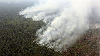 2017'de 15 milyon hektar ormanlık alan yok edildi
