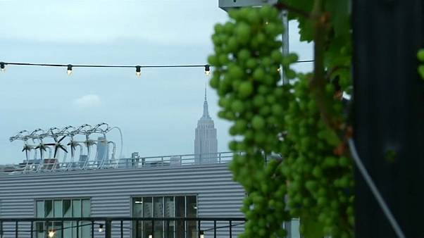 A view of the Empire State from Rooftop Reds