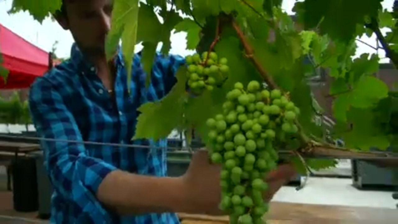 Κόκκινο κρασί από τις ταράτσες της Νέας Υόρκης