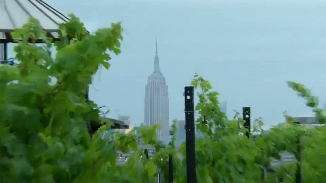 Un viñedo en los tejados de Nueva York