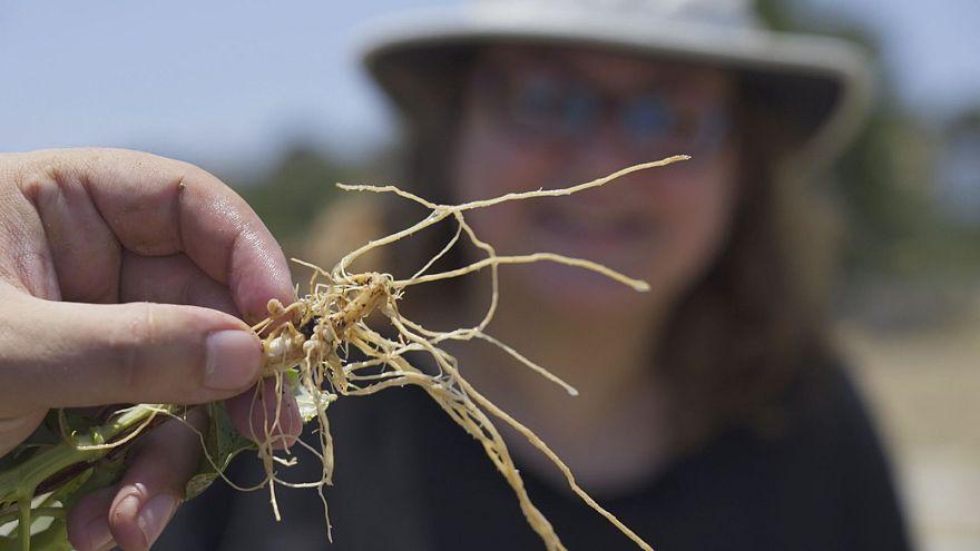 افزایش تنوع زیستی برای سبزیجات متنوعتر و خوشطعمتر