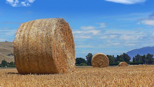 OECD tarım raporu: Türkiye'de fiyatlar, dünya ortalamasının yüzde 28 üzerinde seyrediyor